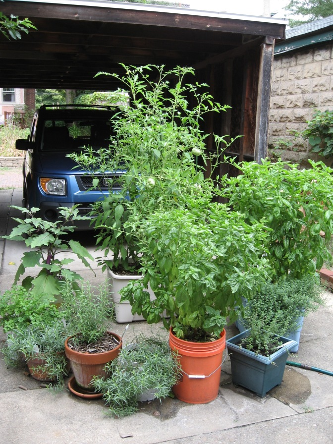 concrete yard and container garden